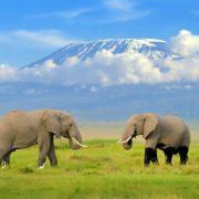 Amboseli excursions image 1