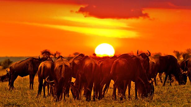 Masai Mara excursions image 1