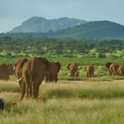 samburu-kenya-elephants-1