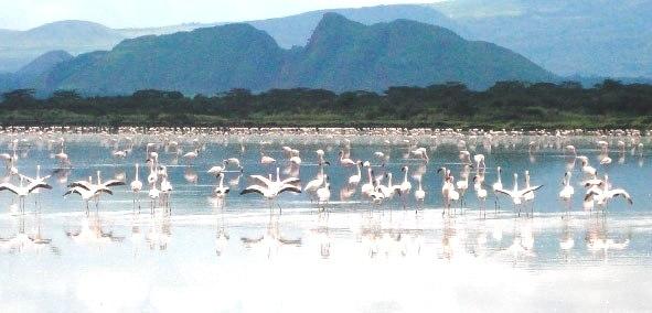 Lake Elementaita excursions image 2