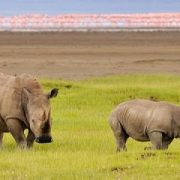 Weekly safari itineraries safari itinerary 1
