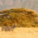 Safari itinerary 1 (3)