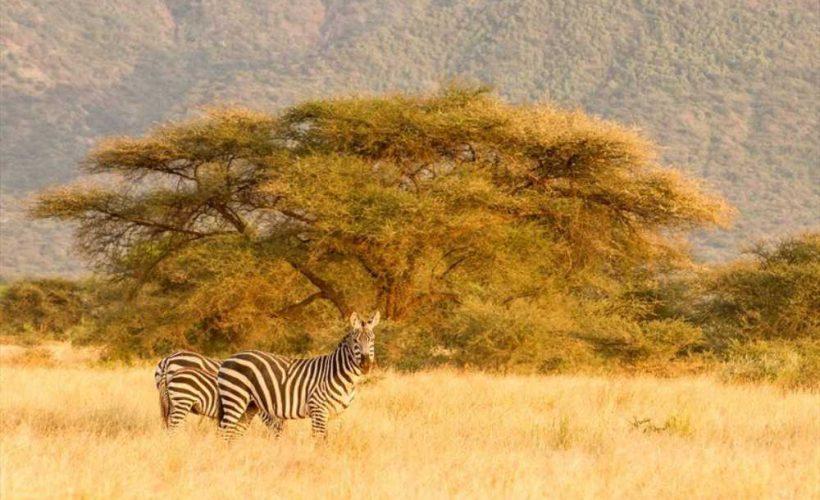 Safari itinerary 1 (3)