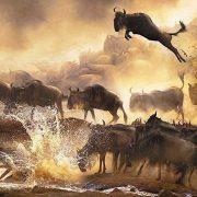 Safari itinerary 1 & 2