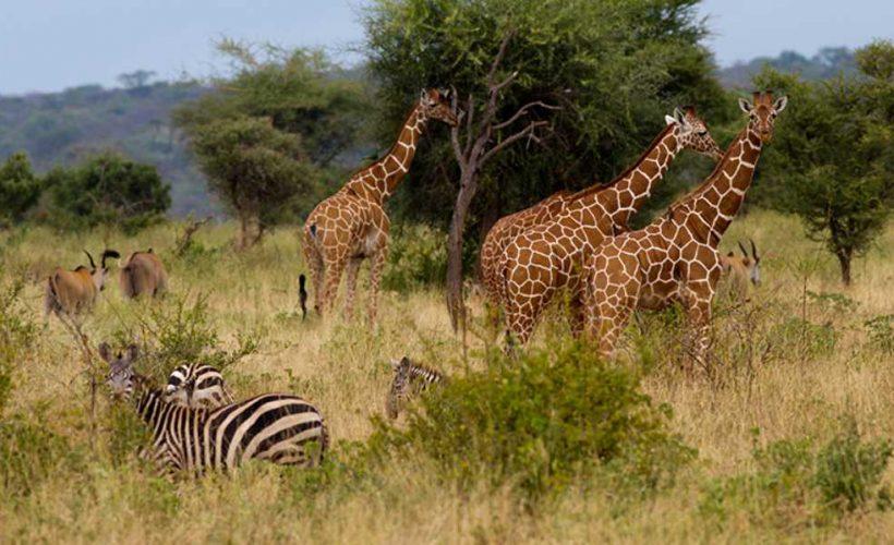 Safari itinerary 1 (4)