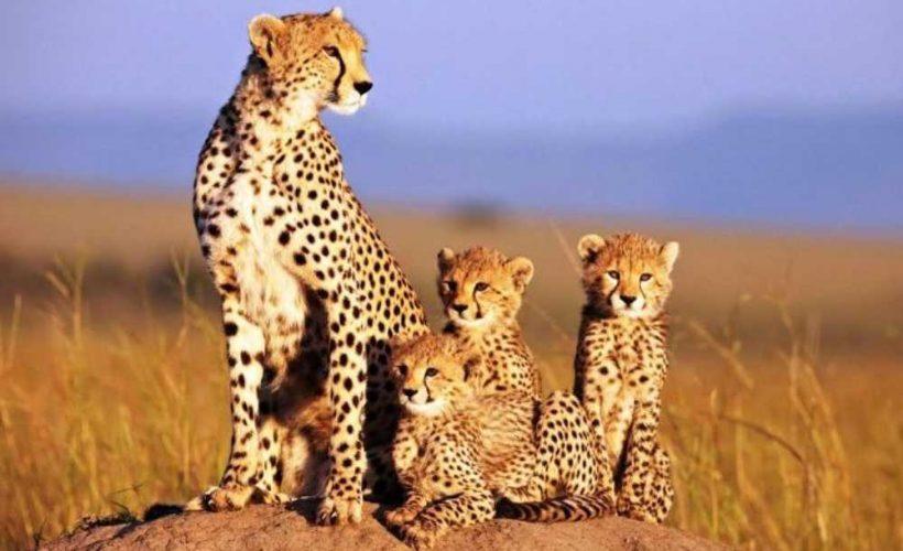 Safari itinerary 1