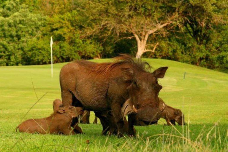 safari itinerary 2 (2)